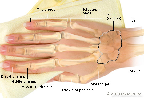 Picture of Hand Anatomy