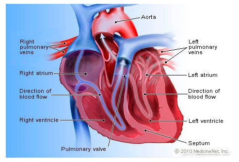 Picture of Heart Detail