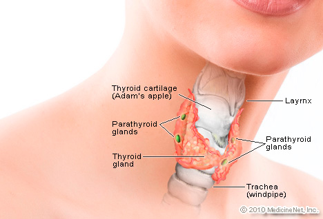 http://images.rxlist.com/images/featured/detail_thyroid2.jpg