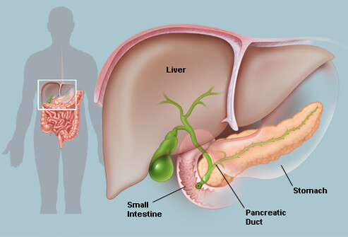Picture of Pancreas