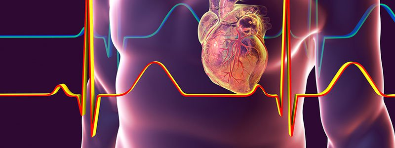 Illustration of activity within the heart.