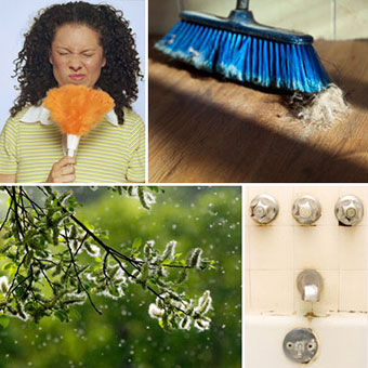 A collage shows various particles we breathe in, such as dust, dander, pollen, and mold.