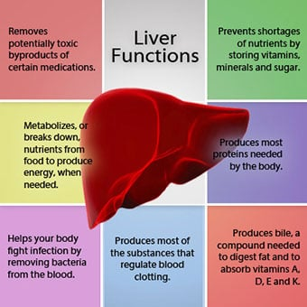 A chart shows the functions of the liver.