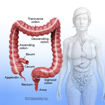 An illustration of the colon anatomy.