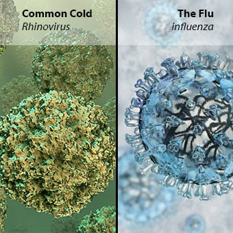 Examples of the rhinovirus and influenza virus.