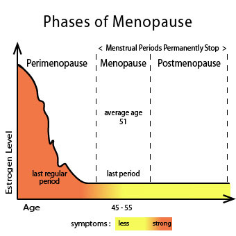 A raph chart shows the phases or stages of menopause.