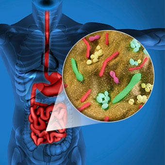 Illustration shows a callout of gut bacteria in the intestines.