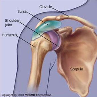 Shoulder Bursitis Pain Symptoms Treatment Amp Pictures