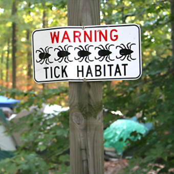 Ticks can transmit various diseases that may lead to serious illness.