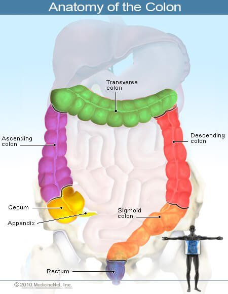 Picture of Colon Anatomy and Sources of Rectal Bleeding