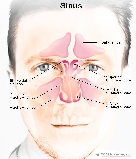 Picture of the Sinuses
