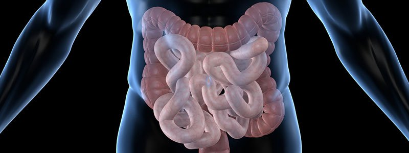 Illustration of human intestines.