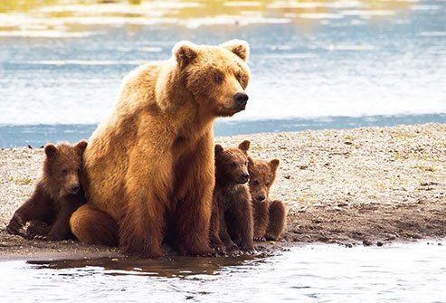 If it's a brown or grizzly bear, play dead. If it's a black bear, you must try to escape or fight back.