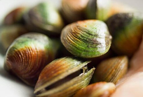 Shellfish include several popular food species, such as clams, oysters, mussels, and scallops.