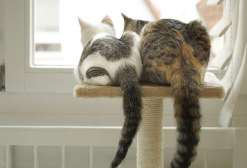 Two cats looking out the window.