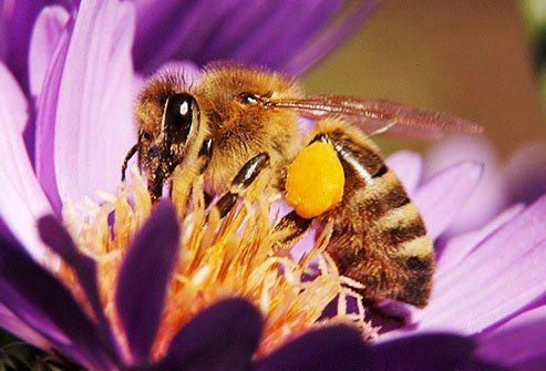 When they are hunting for nectar, bees do store it in a special second stomach just for honey.