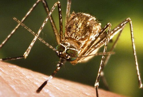 For the most part, mosquitoes cause itchy hives when they bite.