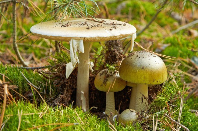 Some wild mushrooms may cause severe symptoms or even death.