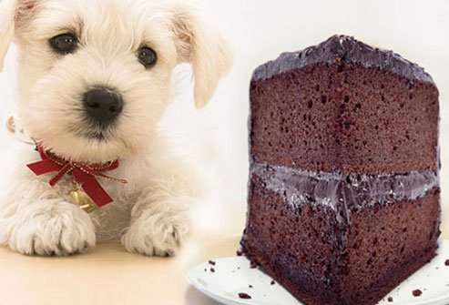dogs should avoid chocolate