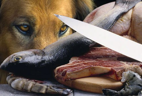 dogs should not eat raw meat or fish
