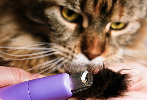 Your cat can give you this bacterial infection with a scratch, bite, or if she licks an open wound.