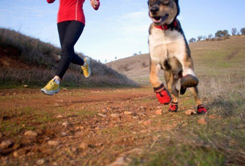 Dog running on a trail with owner
