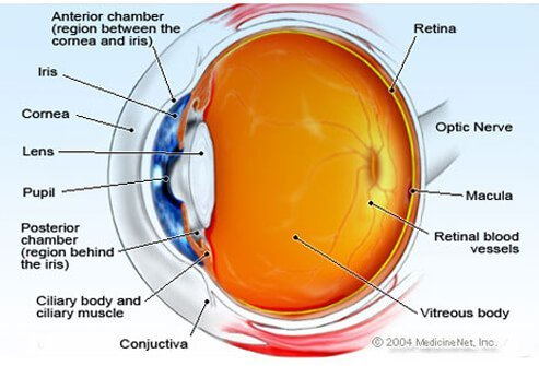 The anatomy of the eye is complex.