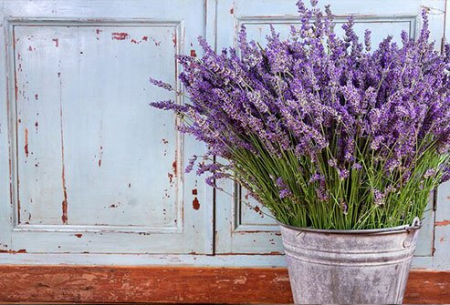 This fragrant purple plant has been an important herbal medicine for centuries.