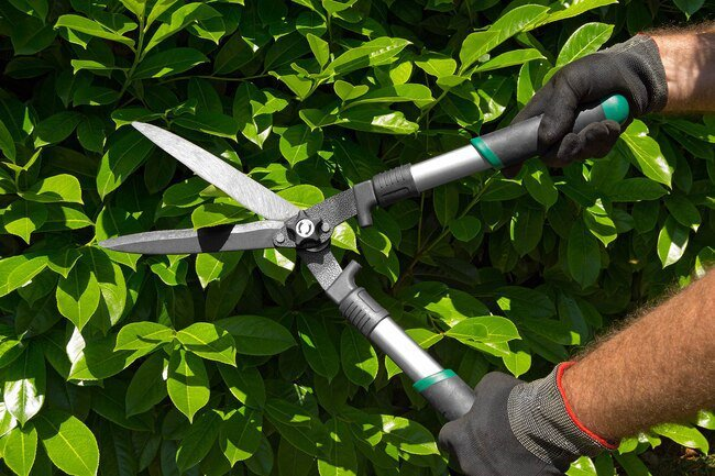 Keep your yard well groomed and free of debris to minimize the risk of pests.