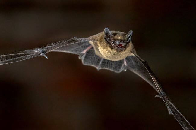 The bites of bats and bat droppings can make you sick.