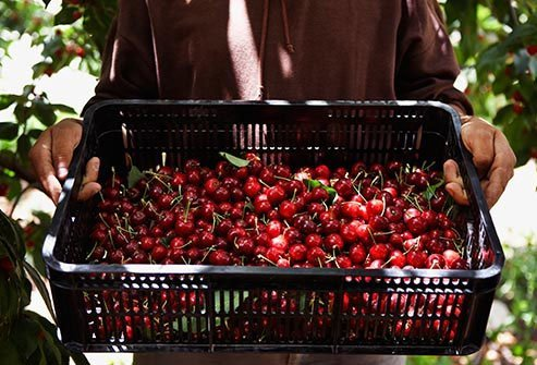Red cherries benefit your blood vessels and joints.