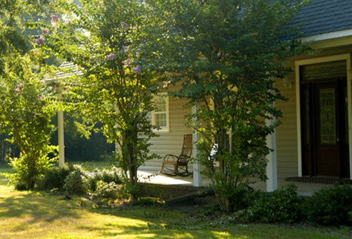 Early morning image of home with greenery around the house.
