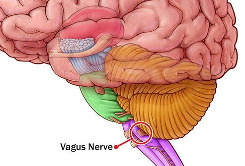If your blood sugar is high for too long, it can damage the vagus nerve, which helps move food through your stomach and intestines.