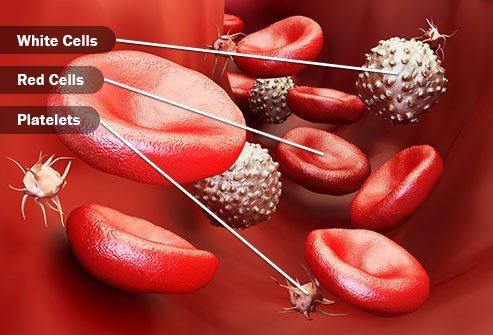 Your marrow makes and releases hundreds of billions of these cells every day.