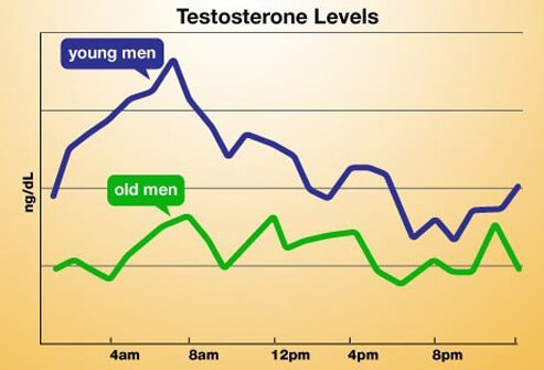 A chart of daily testosterone levels.