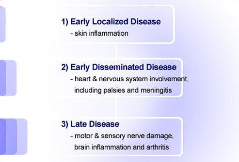 There are three distinct phases of Lyme disease.