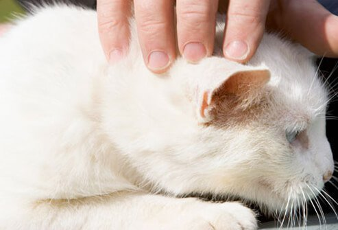 It is possible to transfer MRSA to pets.