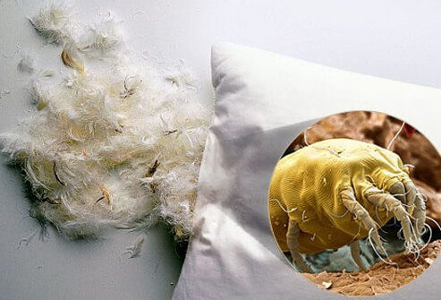 Photo of a feather pillow and image of dust mite.