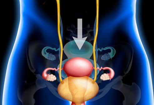 Illustration of female genitourinary tract.