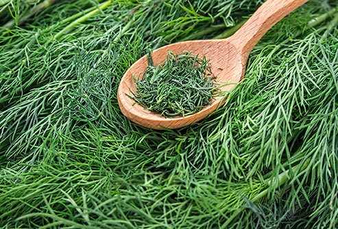 If you'd like to try a non-drug treatment for menstrual pain, dill may be a candidate.
