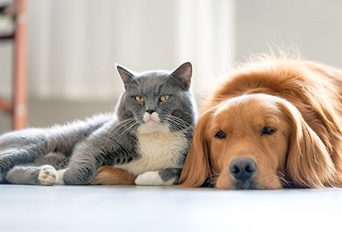 You can control pet dander with products, vigilant cleaning, and HEPA air filters.
