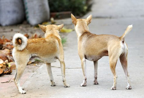 Photo of two dogs.