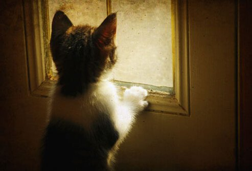 Kitten at a window.