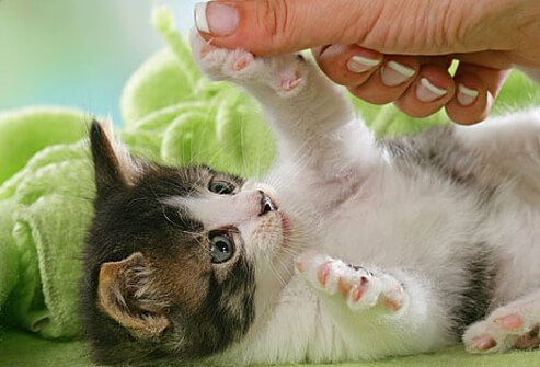 Playing with kitten