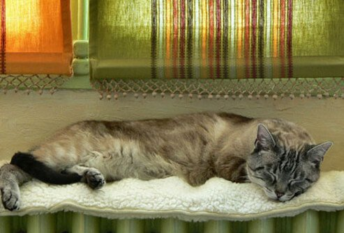 Photo of cat sleeping on radiator under window.