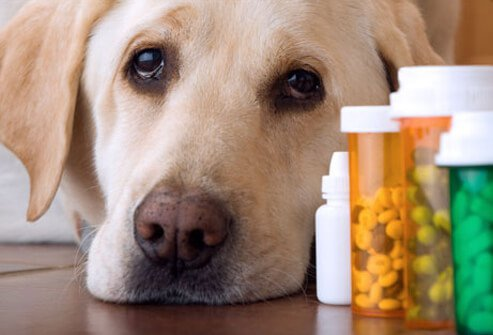 Photo of dog lying by medicine.
