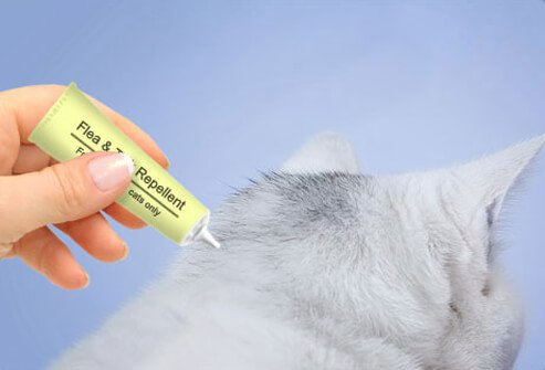 Photo of cat getting ointment.