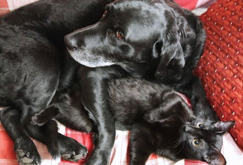 Photo of cat and dog on sofa.