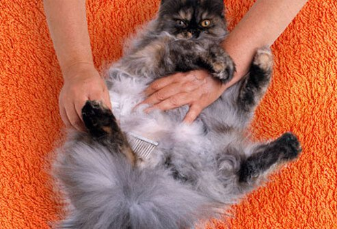 Photo of cat getting combed.
