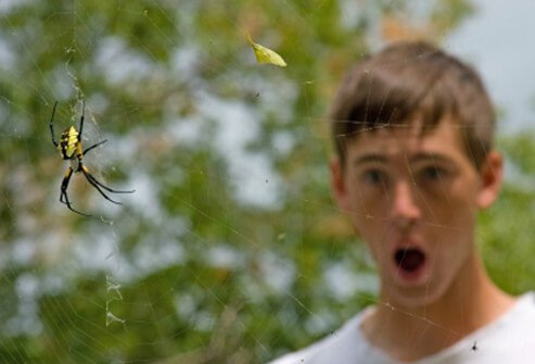 A man that suffers from arachnophobia is shocked when he almost walks into a spider and its web.